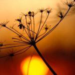 riscaldamento infrarossi settori di utilizzo applicazione